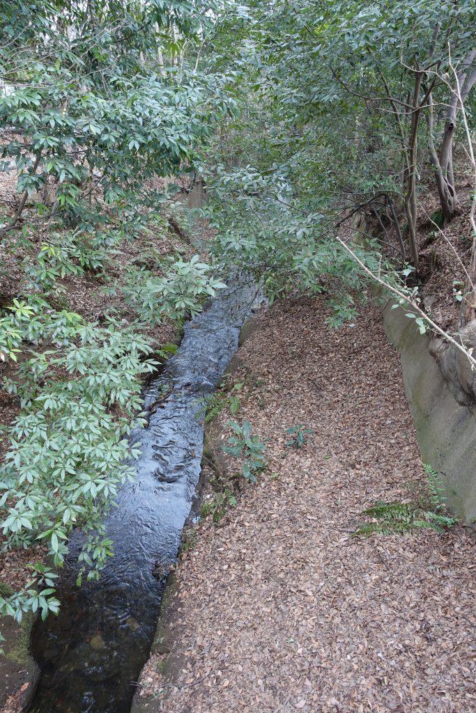 井の頭公園付近玉川上水