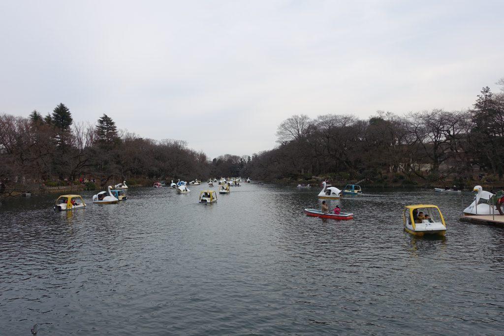 井の頭公園内 多数のボート