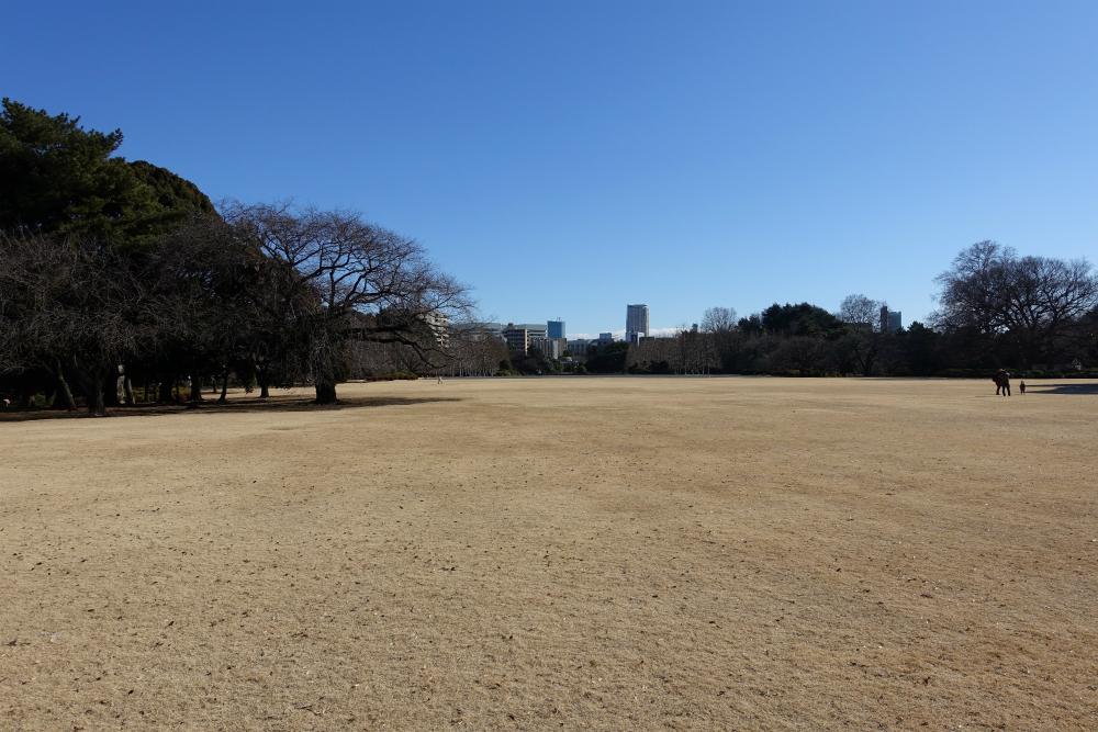 冬の新宿御苑 英国風景式庭園 芝生の広場