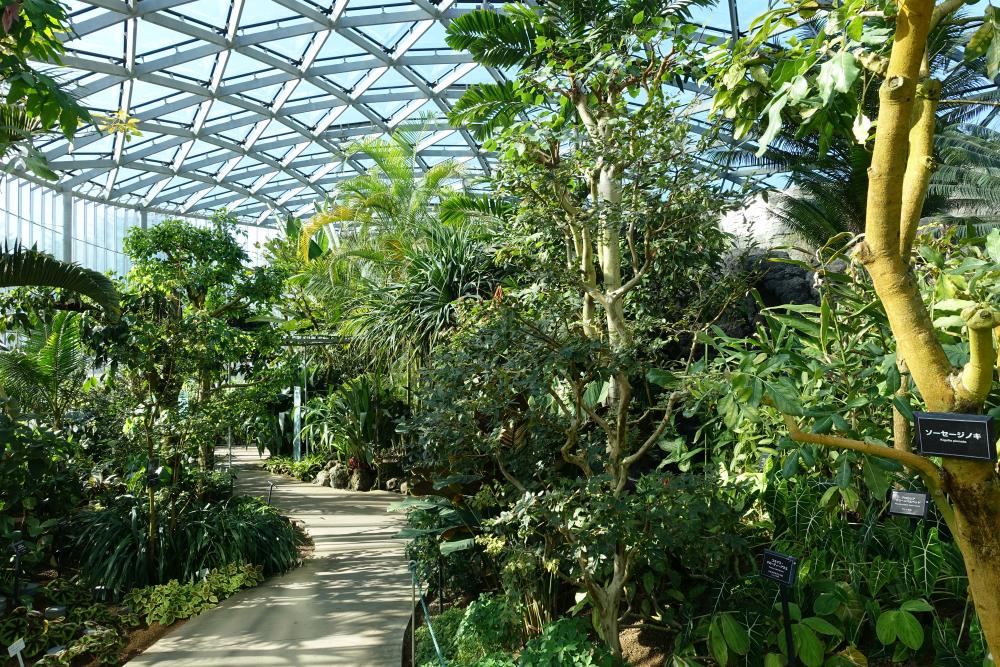 新宿御苑温室通路 熱帯の雰囲気