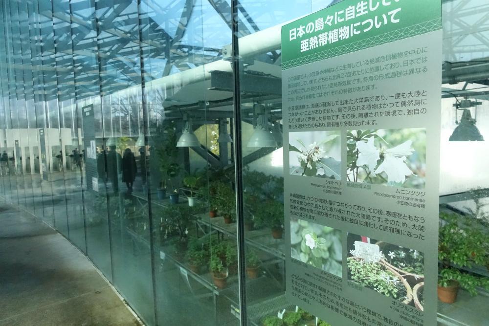 新宿御苑温室 亜熱帯の植物説明