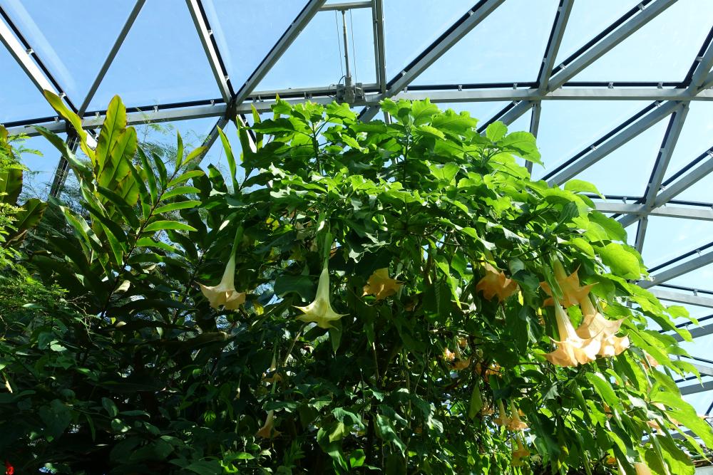新宿御苑温室の植物01