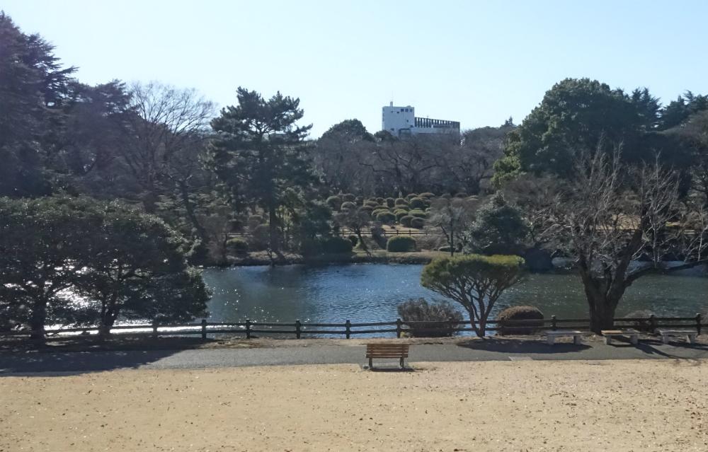 冬の新宿御苑 中の池
