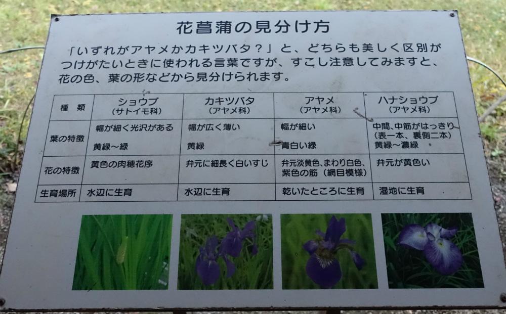 明治神宮御苑 菖蒲田 菖蒲の解説