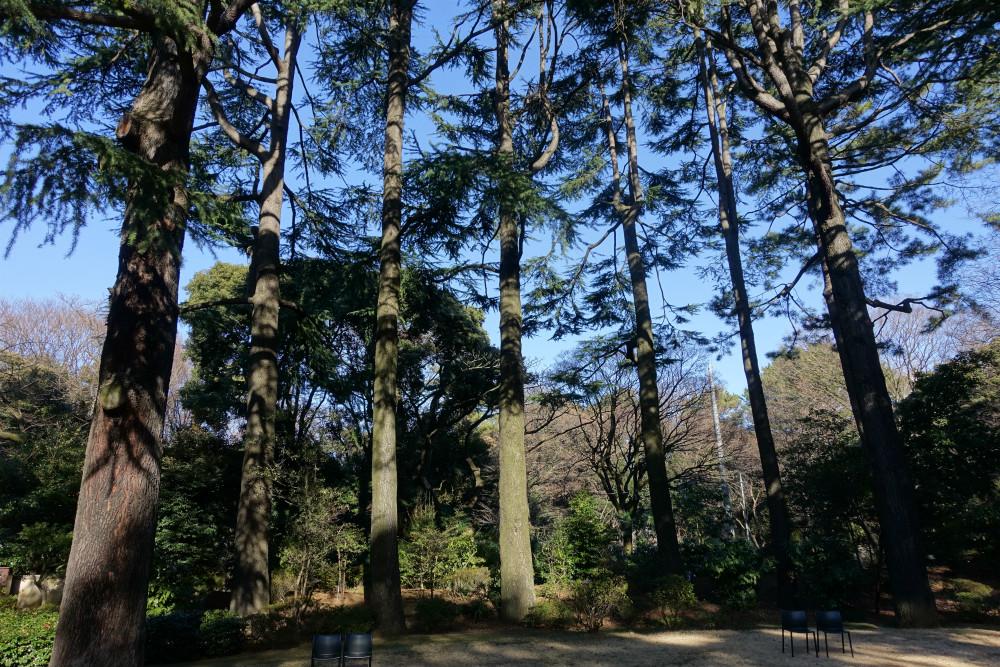 東京都庭園美術館 ヒマラヤシーダーとベンチ
