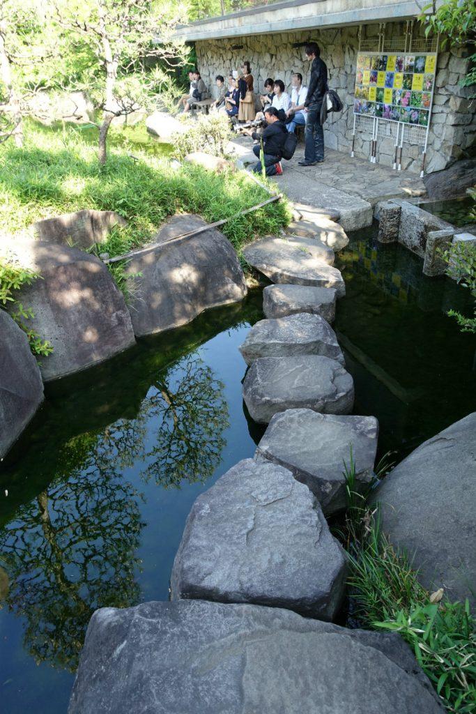 東京 目白庭園の滝