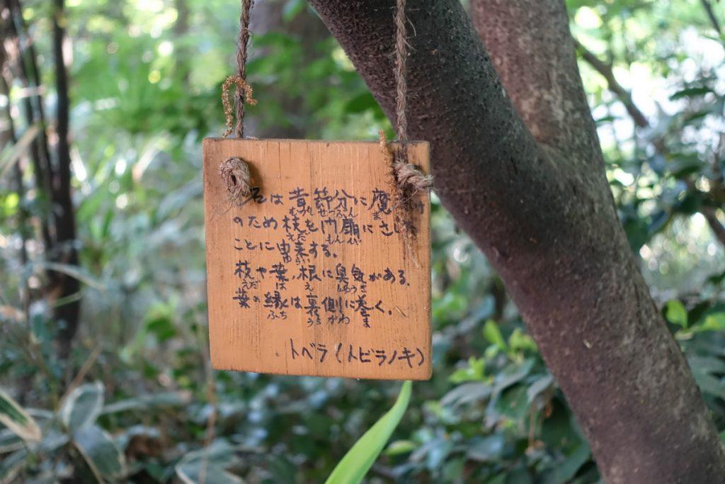東京豊島区目白の森 とびらのき