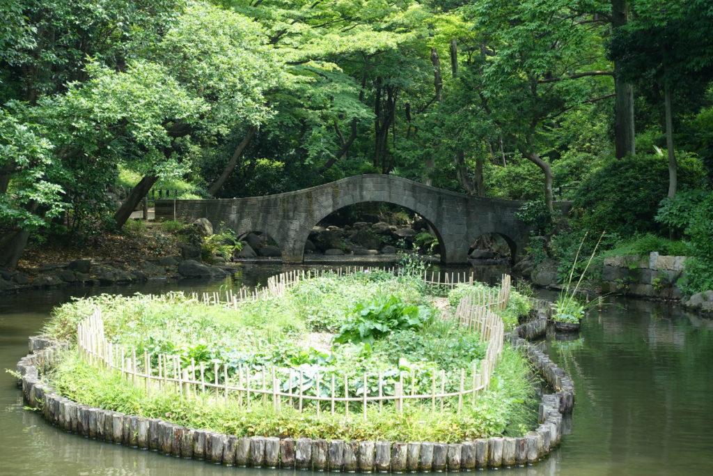 有栖川宮記念公園 池の奥の橋と花菖蒲園