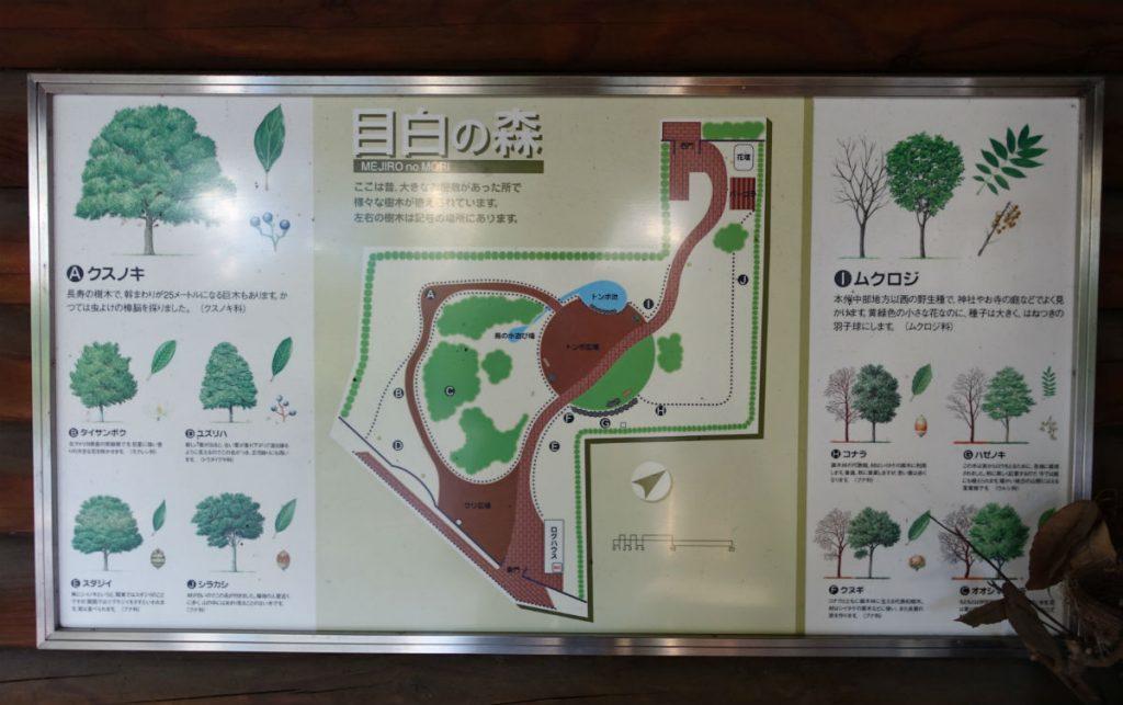 東京豊島区目白の森 自然観察の案内