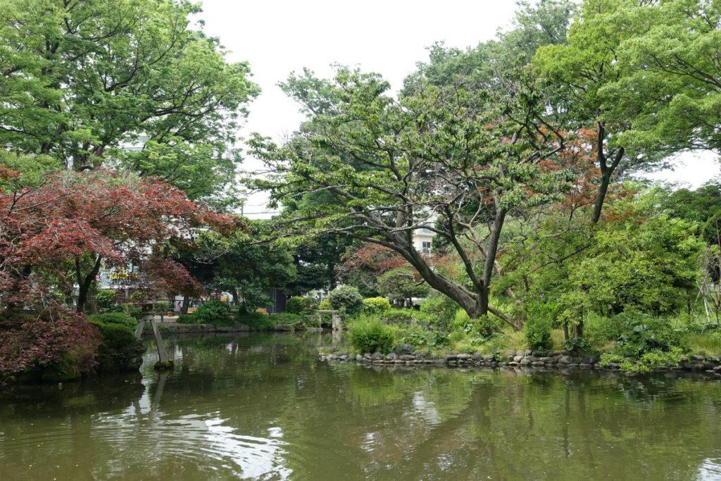 有栖川宮記念公園 池 東側から西方向を眺める