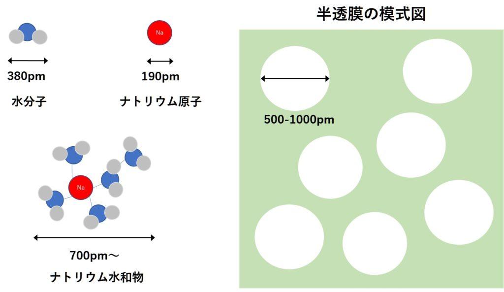 半透膜と水分子ナトリウム水和物の大きさの比較イメージ