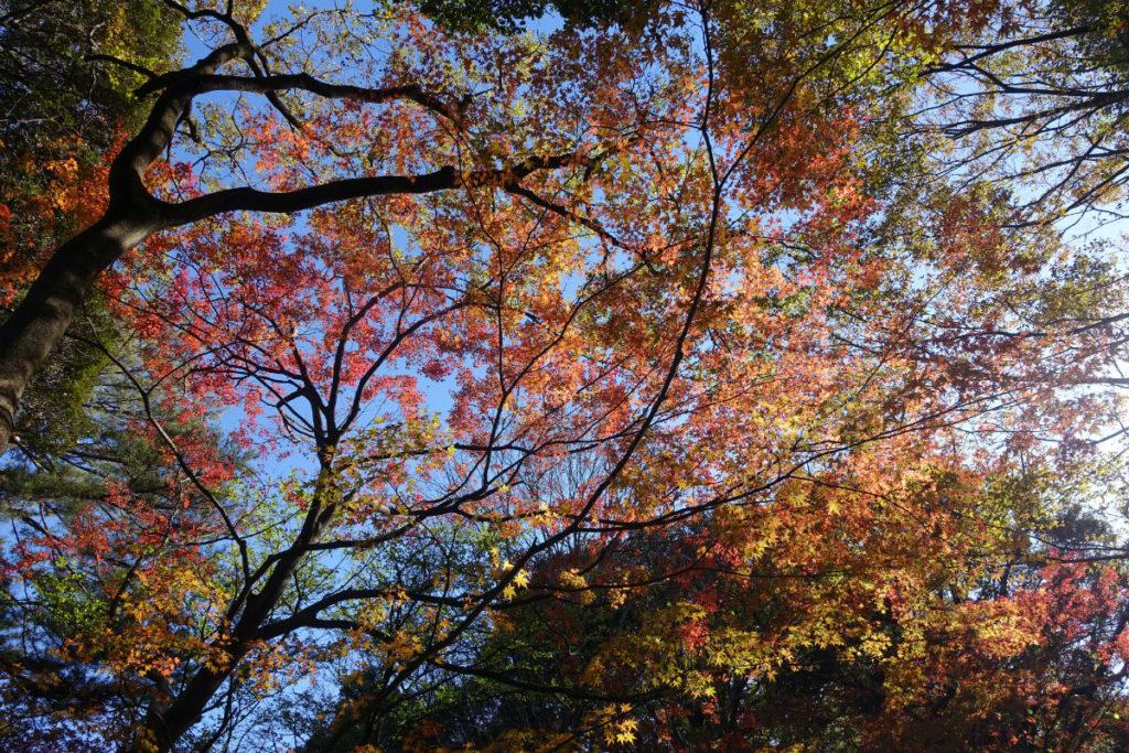 秋の紅葉 六義園 山陰橋付近の紅葉