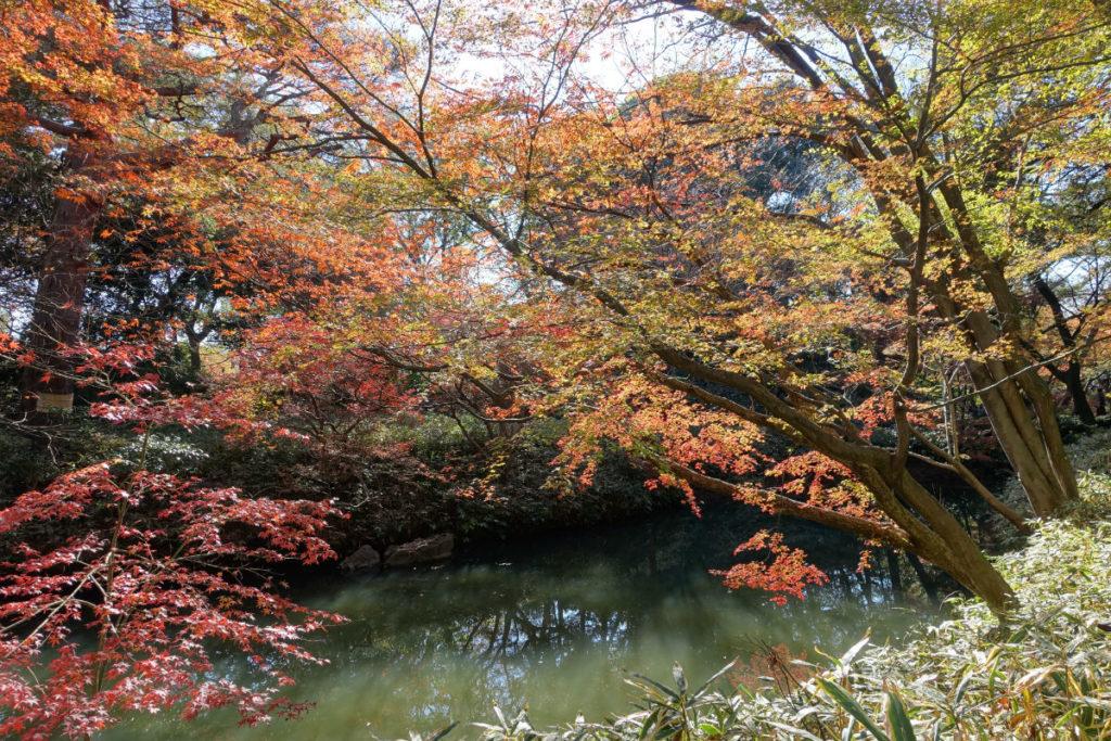 秋の紅葉 六義園 水面と紅葉