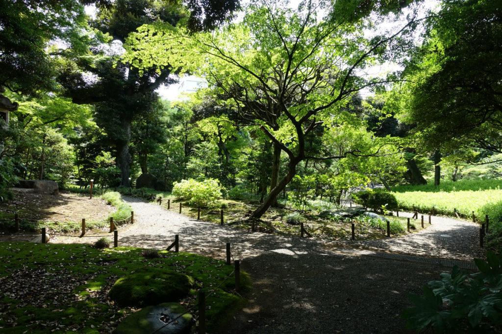 旧古河庭園 洋館南西の森3