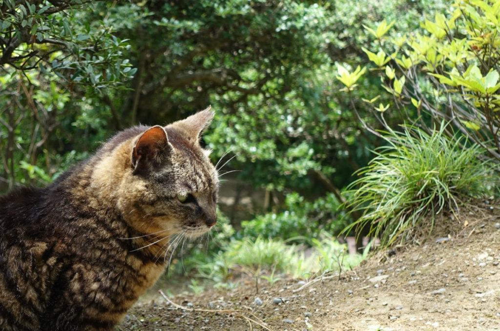 旧古河庭園 見晴台のネコ