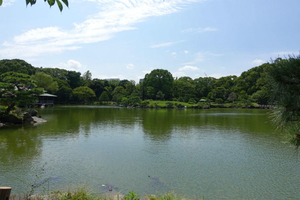 清澄庭園 中の島から泉水