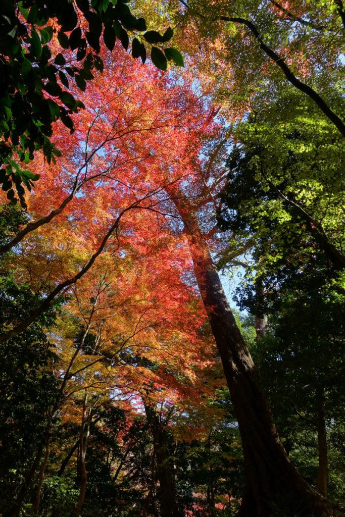 小石川後楽園 赤黄緑