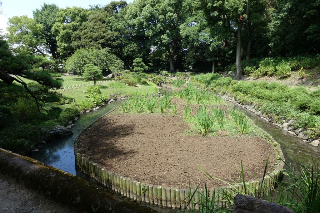 清澄庭園 菖蒲池 夏