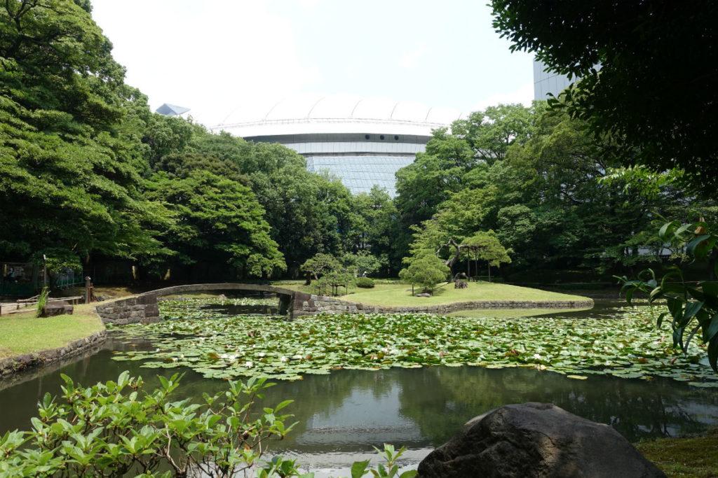 小石川後楽園 内庭の池 蓮