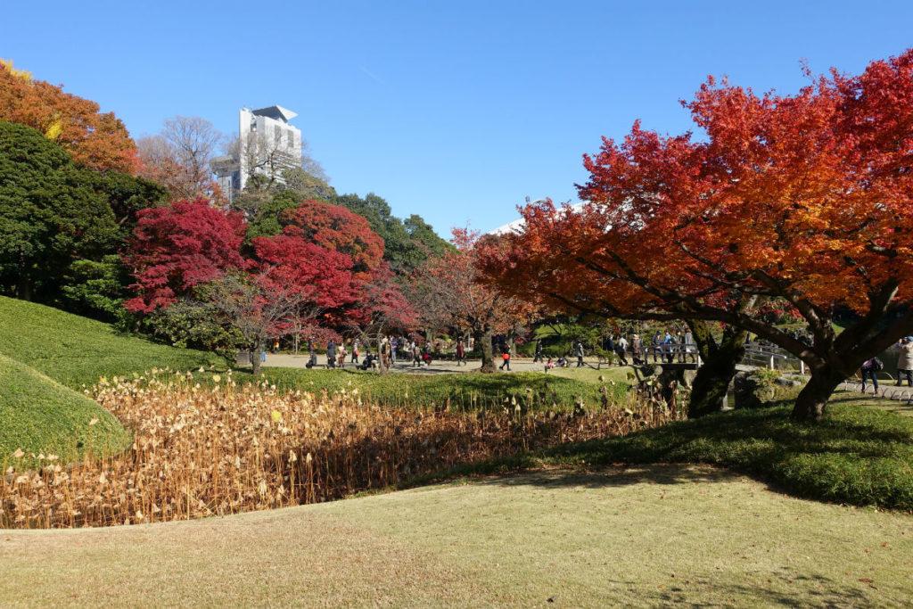 小石川後楽園 小廬山バックの紅葉