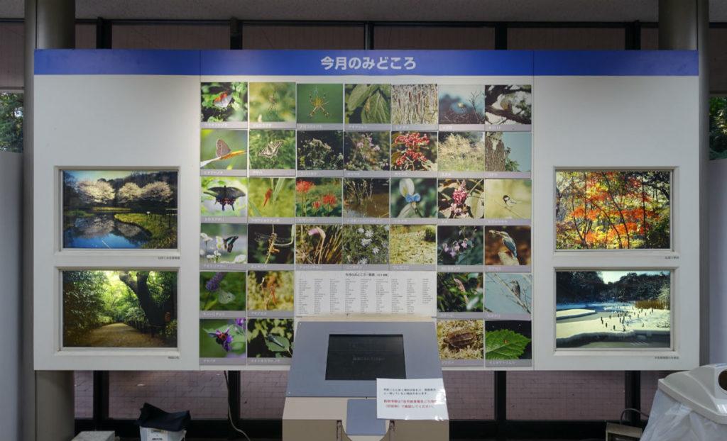 白金台自然教育園05 四季の写真と今月の見どころ