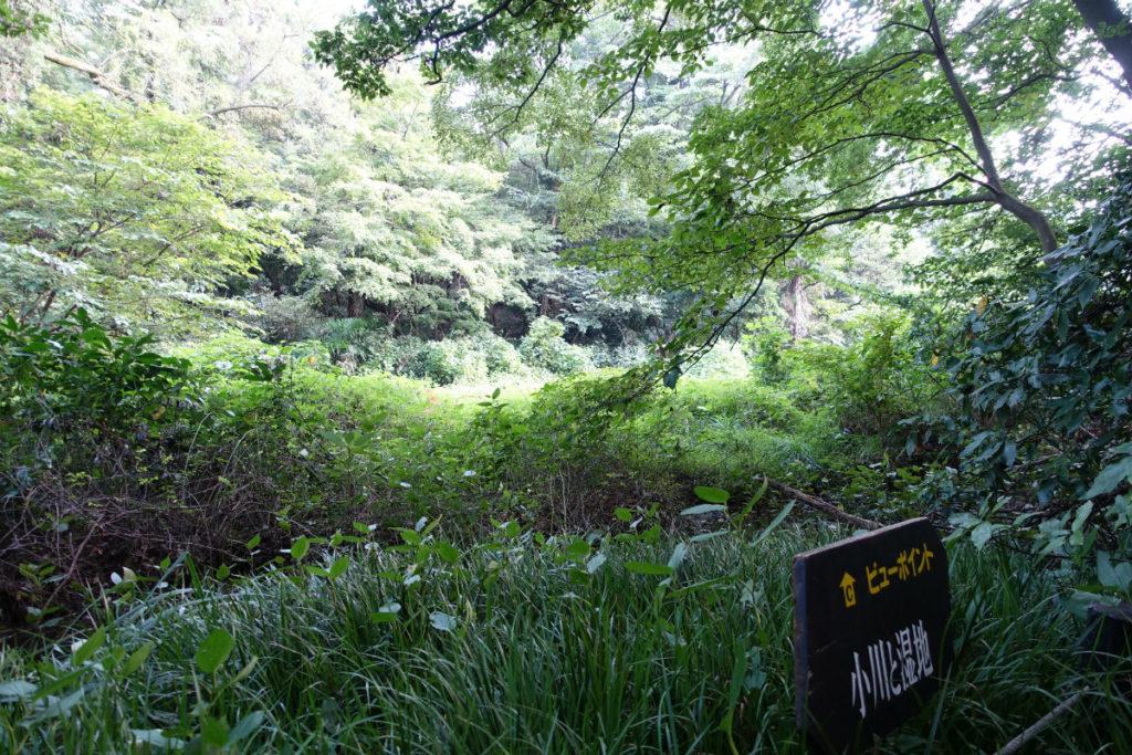白金台自然教育園36 森の小道から眺める湿地と流れ