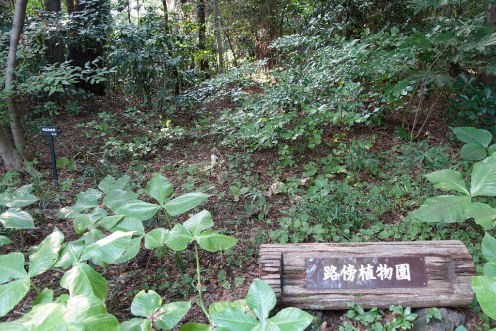 白金台自然教育園48 路傍植物園