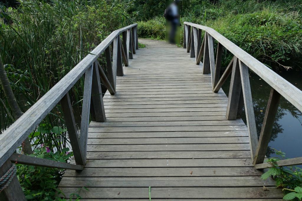白金台自然教育園25 水生植物園に架かる木橋