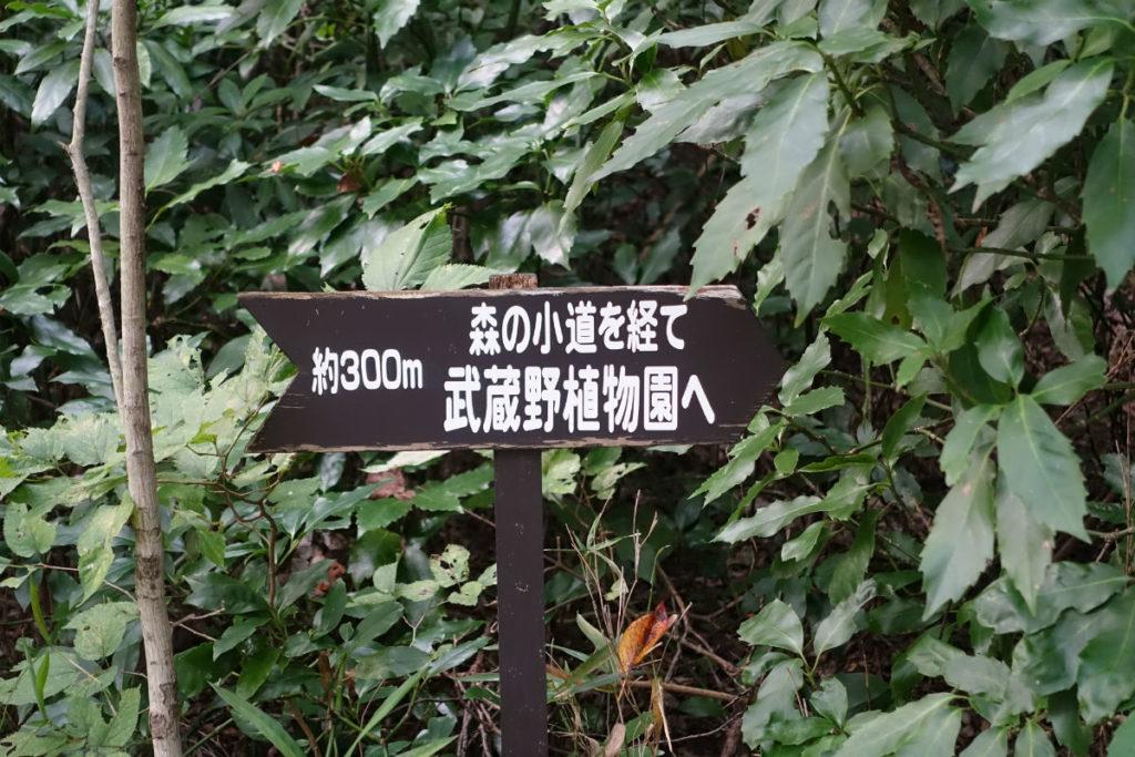 白金台自然教育園34 森の小道へ