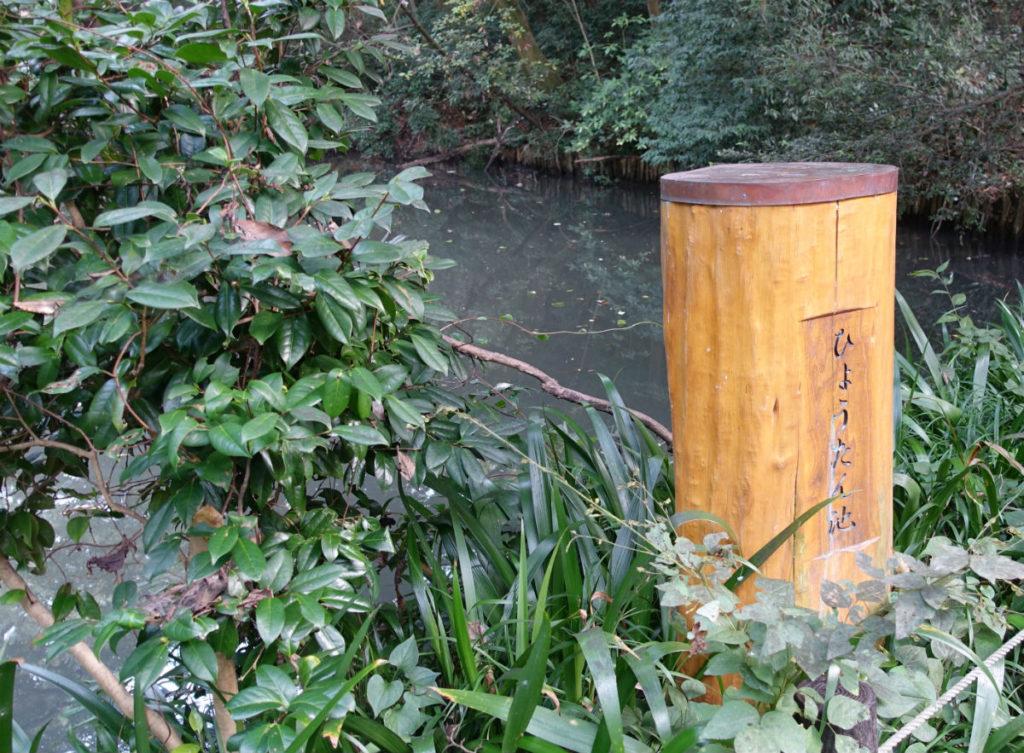 白金台自然教育園19 ひょうたん池