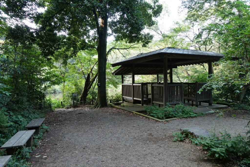 白金台自然教育園21 水生植物園の沼を眺める東屋