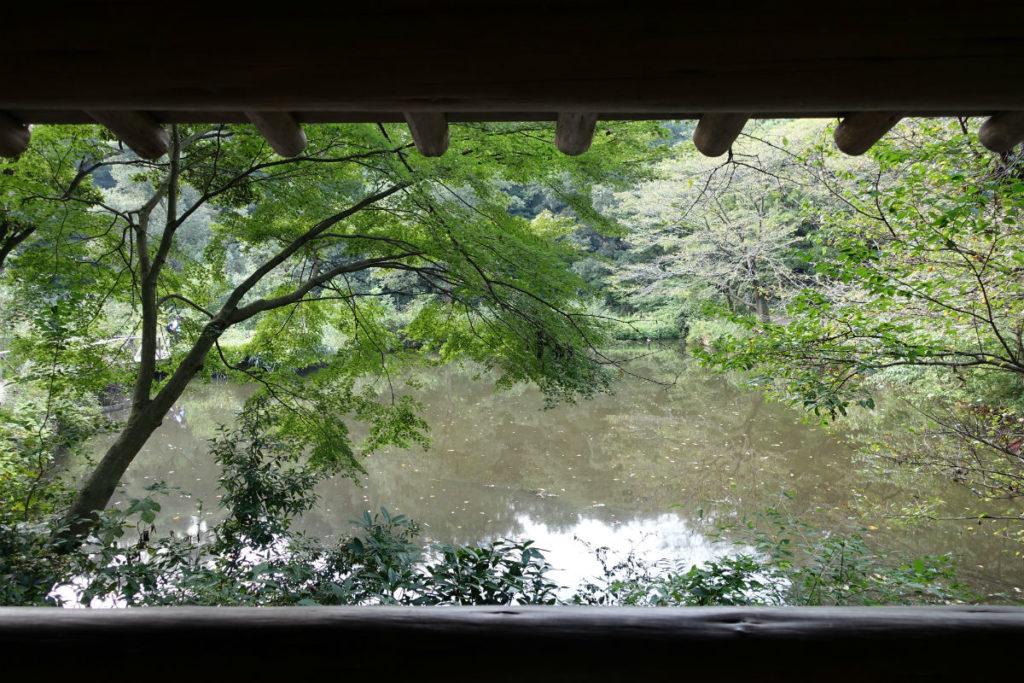 白金台自然教育園23 東屋から眺める水生植物園