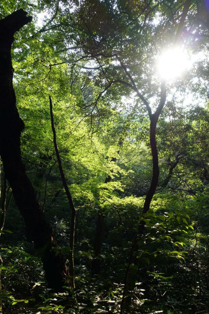 白金台自然教育園18 ひょうたん池への道 木漏れ日
