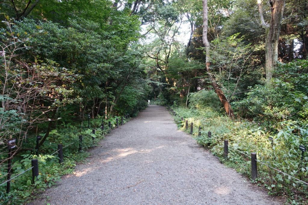 白金台自然教育園08 路傍植物園を診つつ進む
