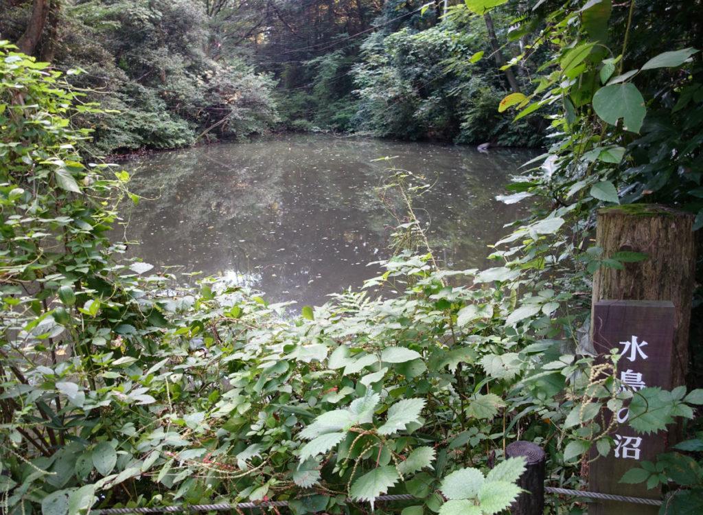 白金台自然教育園42 水鳥の沼