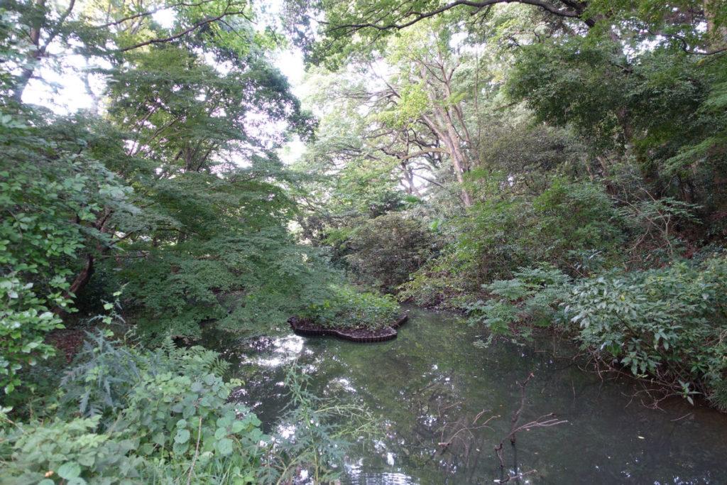 白金台自然教育園40 いもりの池