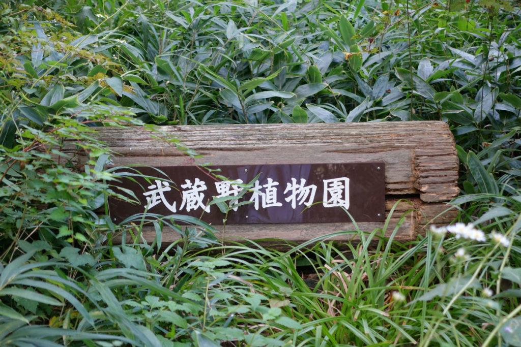 白金台自然教育園38 武蔵野植物園