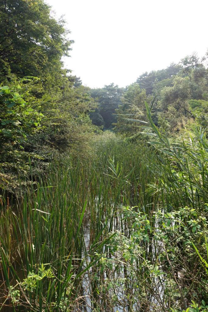白金台自然教育園26 水生植物園 水辺の草木やススキ