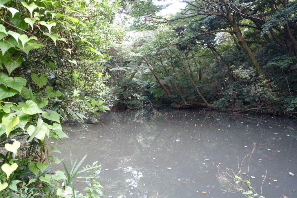 白金台自然教育園20 ひょうたん池全景