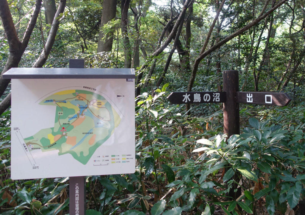 白金台自然教育園17 水鳥の沼への分岐