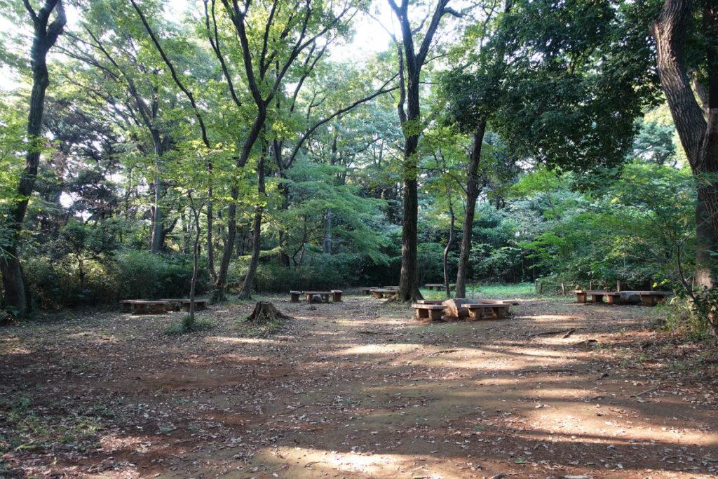 白金台自然教育園39 武蔵野植物園ベンチの広場
