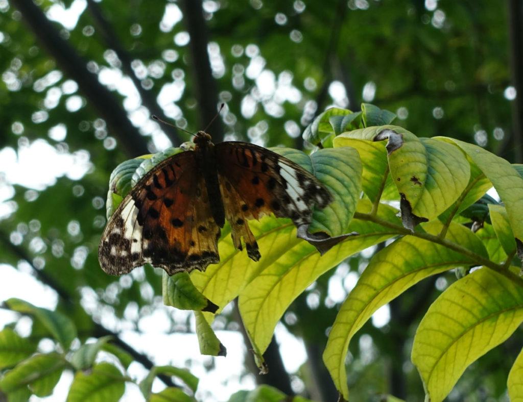 白金台自然教育園31 水生植物園 蝶