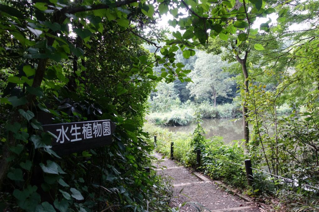 白金台自然教育園24 水生植物園への小径2