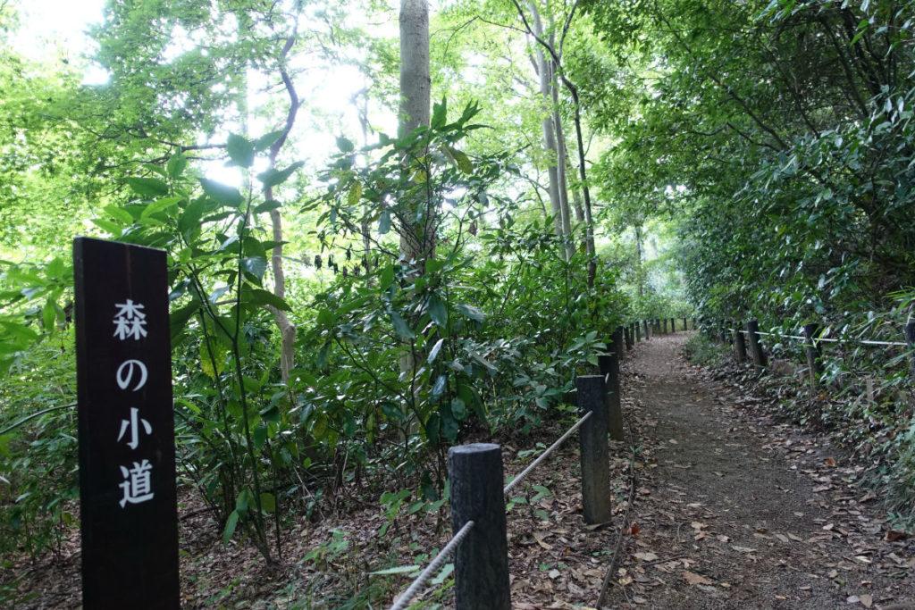 白金台自然教育園35 森の小道