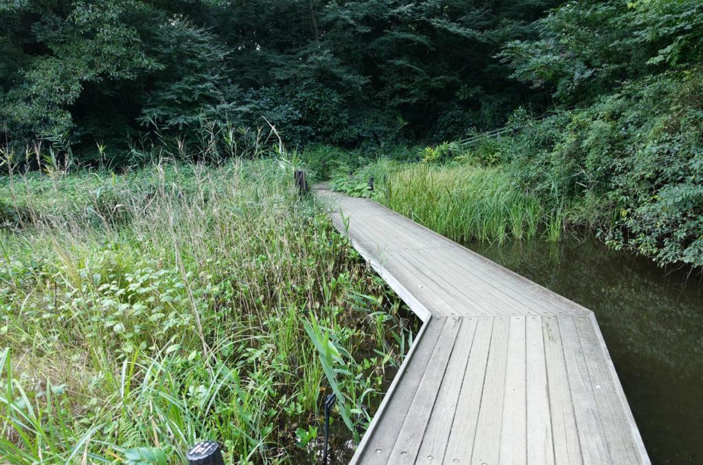 白金台自然教育園29 水生植物園 木橋