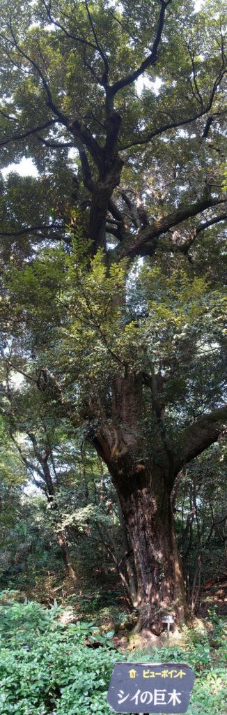 白金台自然教育園15 巨木
