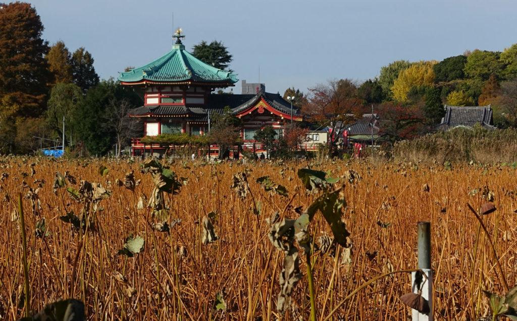 上野恩賜公園 不忍池南から蓮池越しに弁天堂を