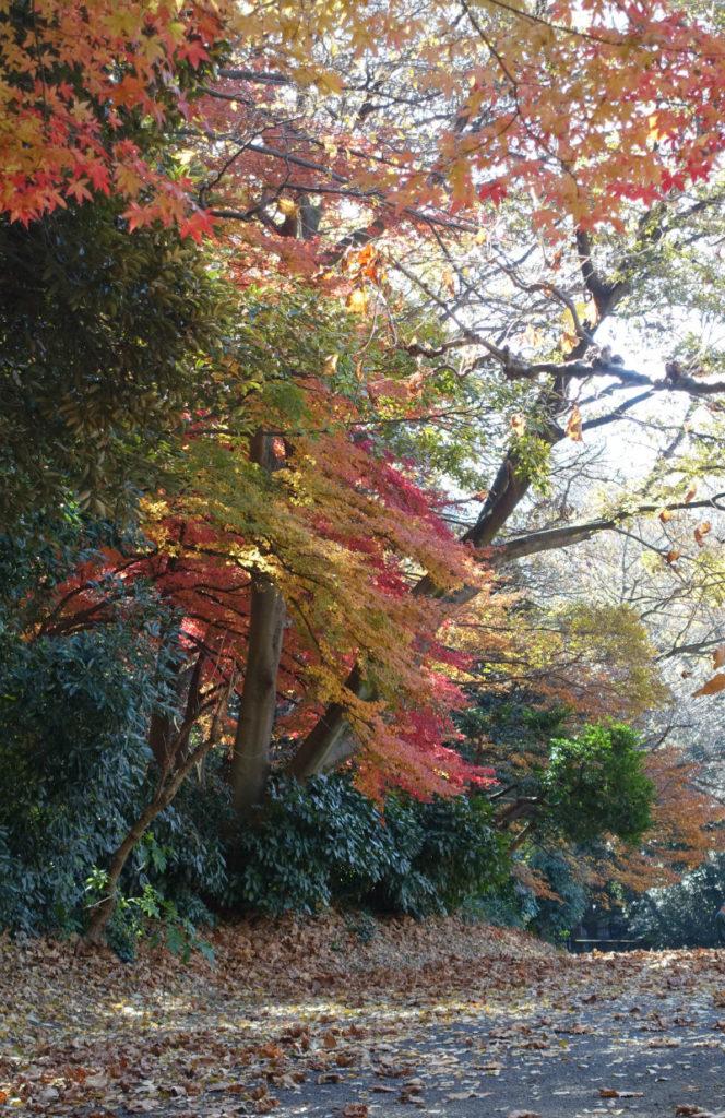 新宿御苑秋 フランス庭園東端あたりの紅葉