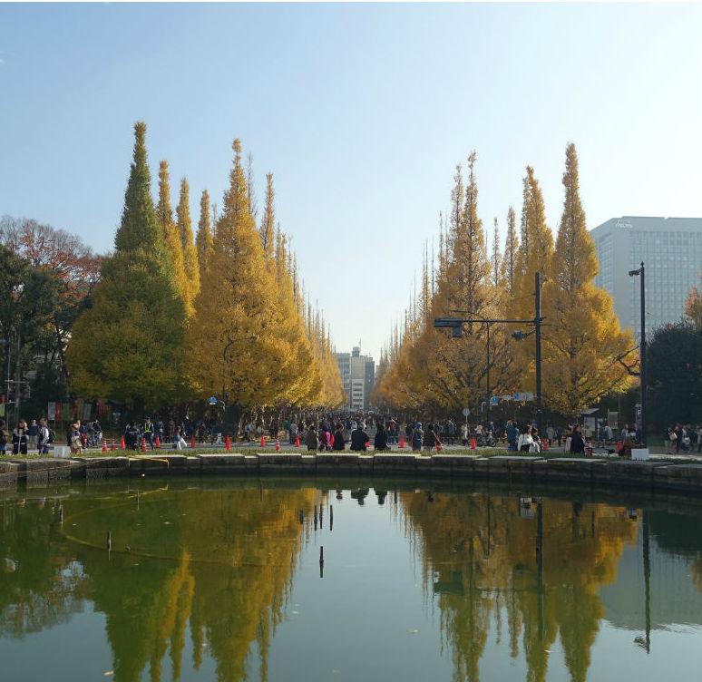 明治神宮外苑 噴水池から銀杏並木EC