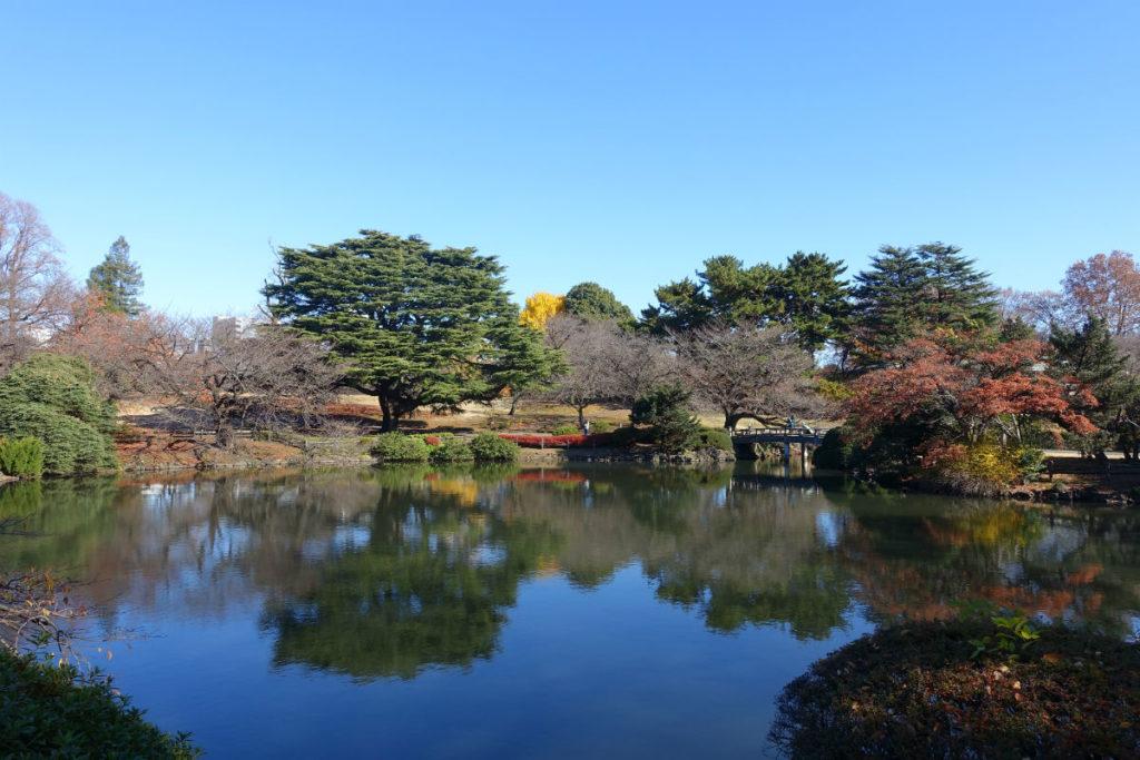 新宿御苑秋 中の池南岸から北東方向